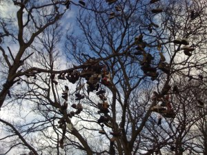 An inexplicably shoe-covered tree in Heaton, Newcastle